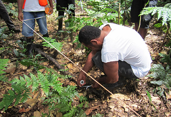 National Forest Inventory to provide valuable insight into Fiji's Forests