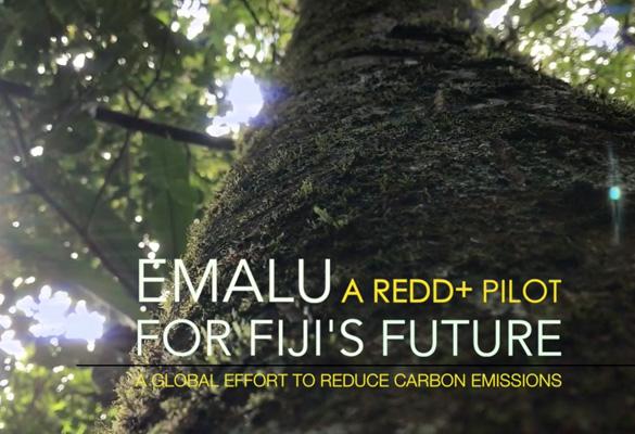 Emalu A REDD+ Pilot Site